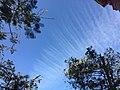 Cielo con nubes raras.jpg