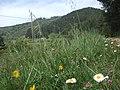 Cima dell'Alta di Sant'Egidio in primavera - panoramio.jpg