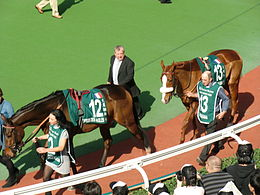 Cirrus des Aigles and Daryakana.jpg