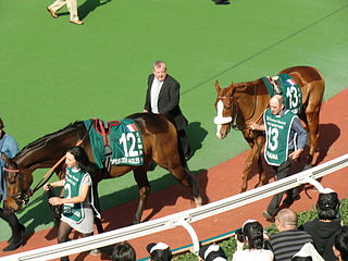 Cirrus des Aigles French-bred Thoroughbred racehorse