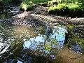 Cleghorn Glen 20 June 2010 (149).JPG