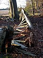 Collapsed fence, Millfield Wood - geograph.org.uk - 695909.jpg