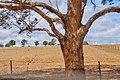 Colour of Australia (48921368093).jpg