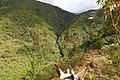 Cordillera central - Costado occidental - Municipio de Génova (Quindío) (15508745412).jpg