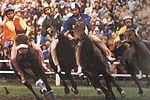 Corsa ippica - Palio di Legnano 1979.jpg