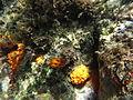 Costa Cabo de Gata 51.JPG