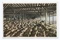 Cotton Awaiting Shipment, Galveston, Texas (NYPL b12647398-75604).tiff