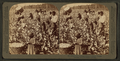 Cotton is king - A plantation scene, Georgia, from Robert N. Dennis collection of stereoscopic views 4.png