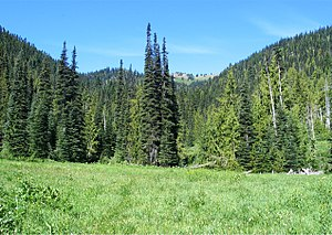 Glade (geography) - A glade in a montane forest in the Olympic Mountains