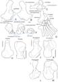 Cretaceous mammal foot bones - ZooKeys 465-13.png