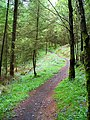 Cycle Trail in Kirroughtree Forest - geograph.org.uk - 431941.jpg