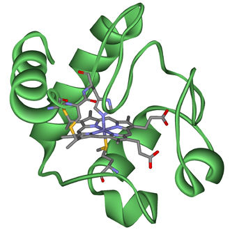 Cytochrome - Cytochrome c with heme c.