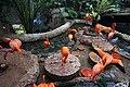 Dallas World Aquarium January 2019 10 (flamingos).jpg