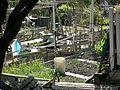 Danny Woo Community Garden 15.jpg