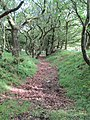 Dead Woman's Ditch. Quantocks - panoramio.jpg