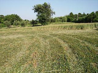 Crop Circles - Ancona, Itália