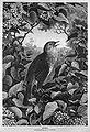Die Gartenlaube (1874) b 415.jpg