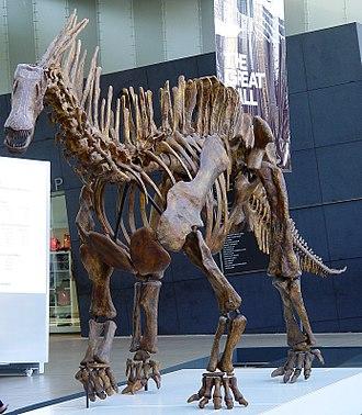 Dicraeosauridae - Amargasaurus