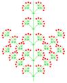 Disjunkt heterokladische Thyrse (inflorescence).PNG