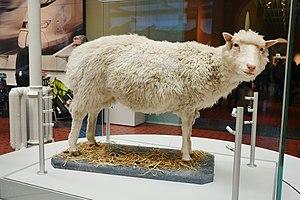 Dolly disecada en el Museo Real de Escocia