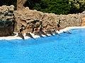Dolphins at Loro Parque 01.JPG