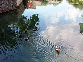 Sager Creek - Ducks float on Sager Creek as downtown Siloam Springs reflects on the water's surface