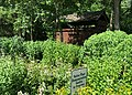 Doylestown Central Park Native Plant Garden 1.jpg