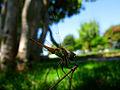 Dragonfly tk 2009 01.jpg