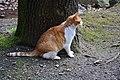 Dresden-Wachwitzgrund-Katze im März 2018-01.jpg