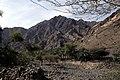 Dunst Oman scan0532.jpg