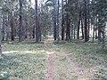Dusetų sen., Lithuania - panoramio (106).jpg