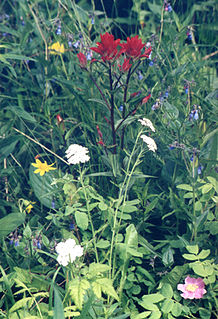 Wildflower Flower that grows in the wild, meaning it was not intentionally seeded or planted
