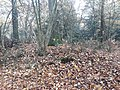 Earthwork enclosures, Oare Common, Berkshire 05.jpg