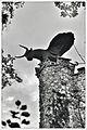 Eben-Ezer tower - NW.jpg