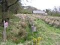 Eggybane - geograph.org.uk - 407624.jpg