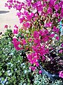 El Zohour Showroomمعرض الزهور بحديقة الاورمان.jpg