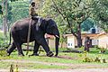 Elephant and Mahout.jpg