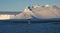 Empereur sur fond de glacier.jpg