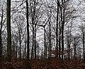 Enercon wind turbine behind trees in Couvin, Belgium (DSC 0498).jpg