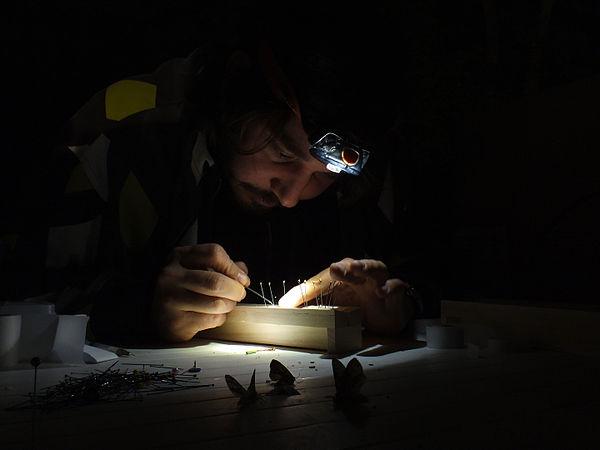 Entomologist sampling moth.JPG
