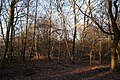 Epping Forest High Beach Waltham Abbey Essex England - trees 01.jpg