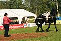 Equipe Australienne de voltige . Lakes Titan élevage du Grand Prainville Cl J Weber0004 (23456690993).jpg