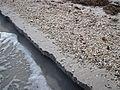 Erosional beach scarp (Cayo Costa Island, Florida, USA) 2 (24219535442).jpg
