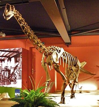 Europasaurus holgeri.jpg