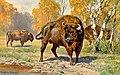 European bison.jpg