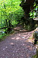 Evergreen Trail at Ricketts Glen State Park.JPG