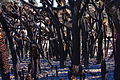 Evil Forest (5499418391).jpg