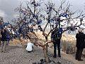 Evil eye tree.jpg