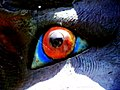 Eye II - Flickr - Stiller Beobachter.jpg
