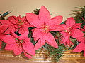 Fake Christmas Poinsettias in pine needle streamer.JPG